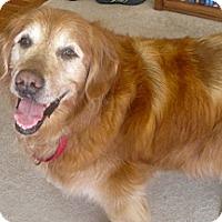 Adopt A Pet :: Sammy - Yorktown, VA