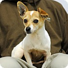 Adopt A Pet :: Xena
