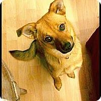 Adopt A Pet :: Annabelle - Sunnyvale, CA