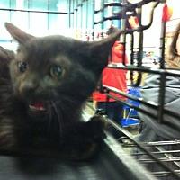 Adopt A Pet :: Simon - Pittstown, NJ