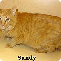 Adopt A Pet :: Sandy - Bentonville, AR