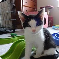 Adopt A Pet :: Kenzie - Colmar, PA