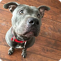 Adopt A Pet :: Hitch - Midway, KY