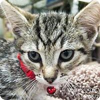 Adopt A Pet :: Finn - Moreno Valley, CA