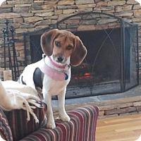 Adopt A Pet :: Tesla ADOPTED! - Atlanta, GA