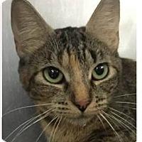 Adopt A Pet :: Paris - Springdale, AR