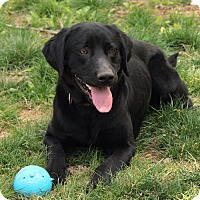 Adopt A Pet :: Sammie - Richmond, VA