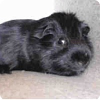 Adopt A Pet :: *Urgent* Bea - Fullerton, CA