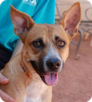 Australian Cattle Dog/Shepherd (Unknown Type) Mix Puppy for adoption in Las Vegas, Nevada - Rafiki
