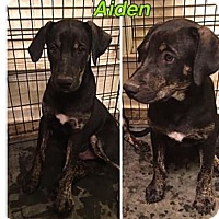 Adopt A Pet :: AIDEN - HARRISBURG, PA