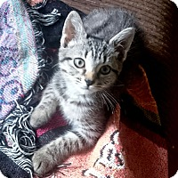 Adopt A Pet :: Maxine - Rocky Hill, CT