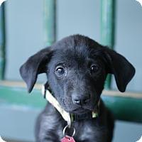 Adopt A Pet :: Wanda - San Antonio, TX