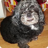 Adopt A Pet :: Rocky - Cary, NC