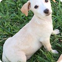 Adopt A Pet :: Fallon#3F - Orlando, FL
