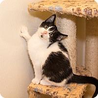 Adopt A Pet :: Tyler - Seville, OH