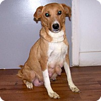 Collie Mix Dog for adoption in Fayetteville, Tennessee - 16-d10-036 Ali