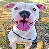 Adopt A Pet :: BOOMER - Tavares, FL