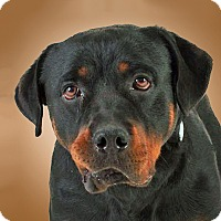 Adopt A Pet :: Gabriel - Prescott, AZ
