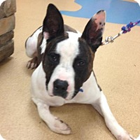 Adopt A Pet :: Flynn - Cincinnati, OH