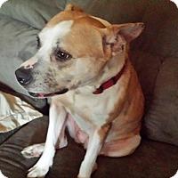 Adopt A Pet :: CARAMEL - Charlotte, NC