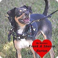 Adopt A Pet :: Sammie - San Leon, TX