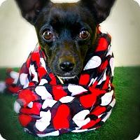 Adopt A Pet :: Minnie May - Casa Grande, AZ