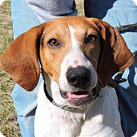 Adopt A Pet :: Zoey - Nashville, IN