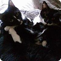 Adopt A Pet :: Vince & Chubby - Walnut Creek, CA