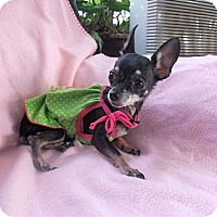 Adopt A Pet :: Lola - Mooy, AL
