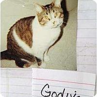 Adopt A Pet :: Godiva - Mobile, AL