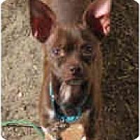 Adopt A Pet :: Pip - Long Beach, CA