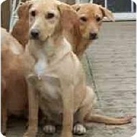 Adopt A Pet :: Sonnet - Wakefield, RI