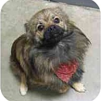 Adopt A Pet :: Adopted!!! Cowboy - Houston, TX