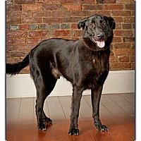 Adopt A Pet :: Miles - Owensboro, KY