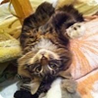 Adopt A Pet :: Lua - Vancouver, BC