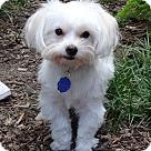 Adopt A Pet :: Ewok