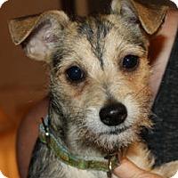 Adopt A Pet :: Bodie - Cheney, KS
