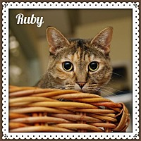 Adopt A Pet :: Ruby - Island Heights, NJ