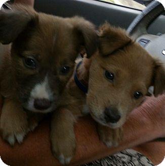 Adopt A Senior Dog Massachusetts