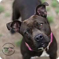 Adopt A Pet :: Diamond - Lyons, NY