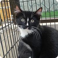Adopt A Pet :: Muffin - Elyria, OH