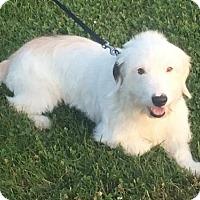 Adopt A Pet :: Archer - Mattoon, IL