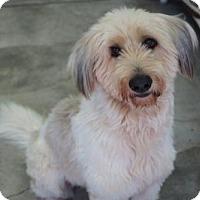 Adopt A Pet :: 'INCA' - Agoura Hills, CA