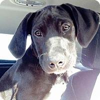 Adopt A Pet :: Dylan RS - Grafton, WI