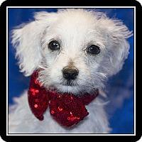 Adopt A Pet :: Nemo - San Diego, CA