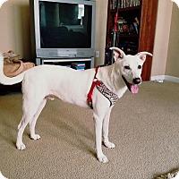 German Shepherd Dog Mix Dog for adoption in San Antonio, Texas - A389400 Jar Jar