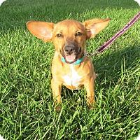Adopt A Pet :: Mindy - New Oxford, PA