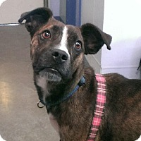 Adopt A Pet :: Kami - Aurora, IL
