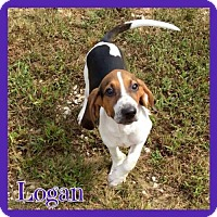 Adopt A Pet :: Logan - Jasper, IN