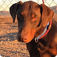 Adopt A Pet :: Rooney - Fillmore, CA